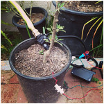 Raspberry Pi for irrigation control_1