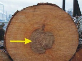 Defects Due to Abnormal Growth of Trees