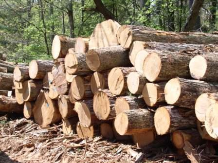 CHARACTERISTICS OF A GOOD TIMBER