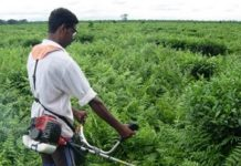 grass-cutter-mechanical-agriculture-project