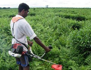 grass-cutter-mechanical-agriculture-project